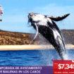 cabos-ballenas